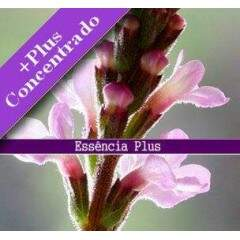 Essência de Verbena +Plus 100ml