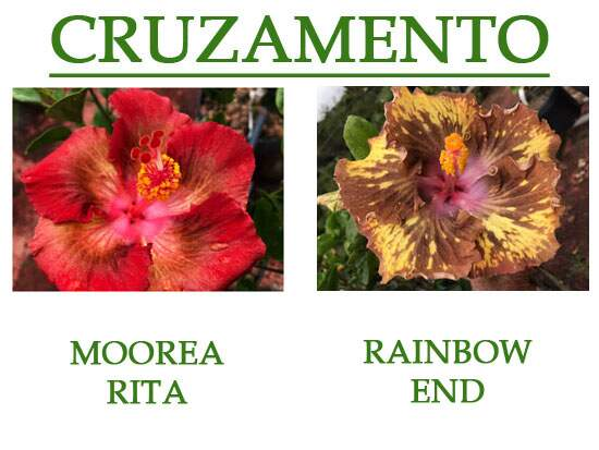 Moorea Rita x Rainbow End