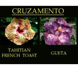 Tahitian French Toast x Gueta