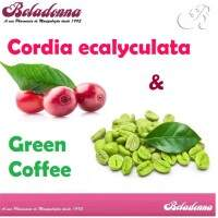 CORDIA ECALYCULATA 300 mg + Green Coffee 500 mg