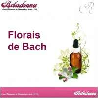 Florais de Bach - Wild Rose 30mL