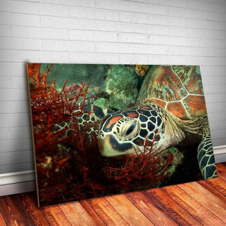Placa decorativa Animais 45 Tartaruga