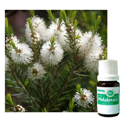 ÓLEO ESSENCIAL DE MELALEUCA (TEA TREE) 10 ML.
